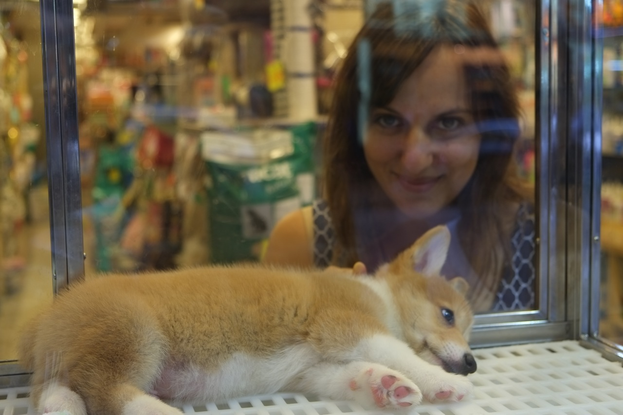 places that sell puppies near me pets world